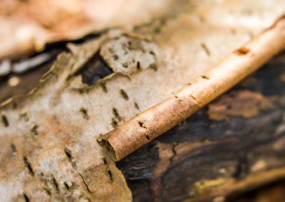 Lovely soundless bark