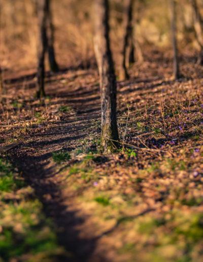 Blues along the path (Edge 50)